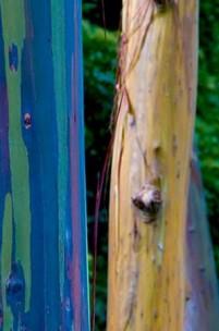 A árvore das mil cores