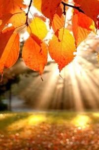 Outono, berço das Estações